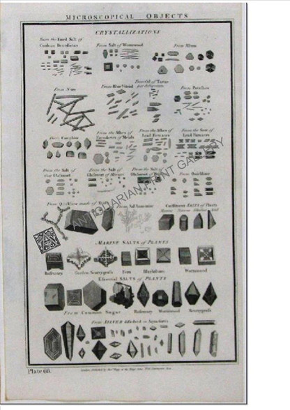 Science Microscopical Objects 1788 copper engraving