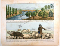 Mathematical Lessons of River life, Domestic Animal and Natural history.