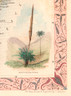 """The unique Xanthorrhea or """"Grass Tree"""" definitely qualified as exotic botany of this Colonial detination."""