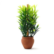 Green Plant in Terracotta Pot