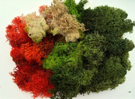 Large Bag of Lichen Moss Assorted Colours 80g