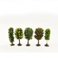 Five Tiny Little Trees 50-60mm