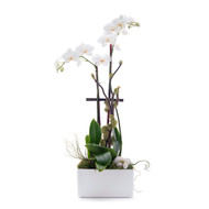 Germany Rectangle Small - Double Phalaenopsis Orchid