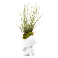 Munny Mini Mohawk - Small Juncea Airplants
