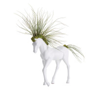 Horse Small Walking - Juncea  Airplants
