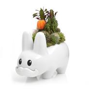 """Happy Labbit White 10"""" - Garden"""