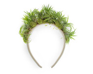 Amazon Crown - Airplants