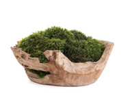 "Natural Wood Low Bowl Large (D18"") - Moss"