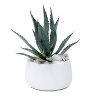 Milano Short Medium White Agave Americana