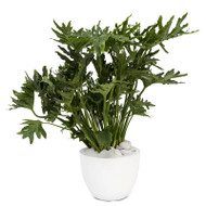 Milano Round Large White Philodendron Selloum