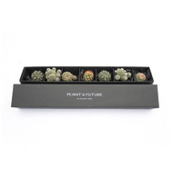 Mini Cacti Collection