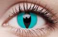 Blue Cat Contact Lenses