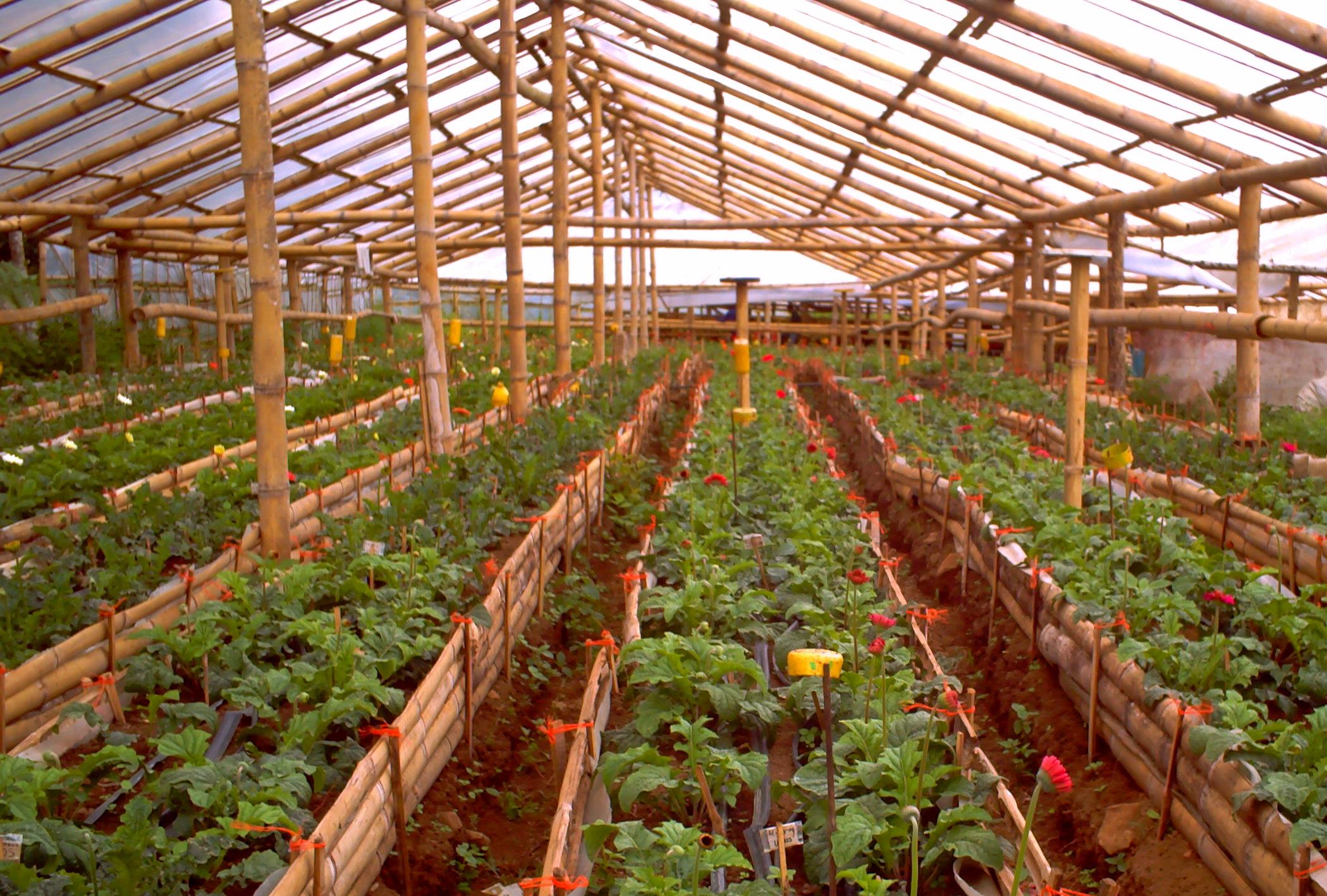 bamboo-greenhouse.jpg