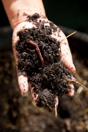 compost-earthworms.jpg