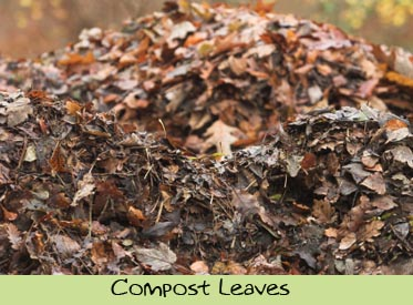 dte-compostleaves.jpg