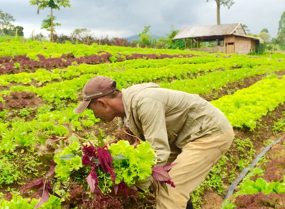 farm-pictures-copy.jpg
