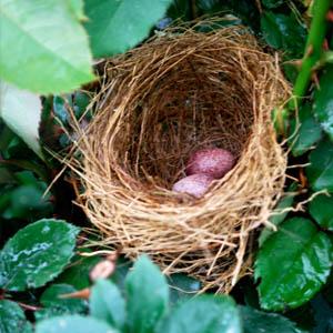 fd-nest.jpg