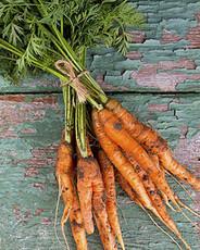 Baby Carrots (Orange)