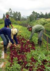 Farm Walk Thru + Garden Design Plan Consult