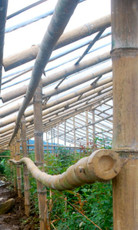 Bamboo Greenhouse Treatment and Design: Basic Course
