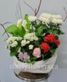 Blooming Gift  Dish Garden