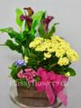 Bright Blooming  Plants Dish Garden