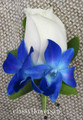 rose with blue orchids boutonniere