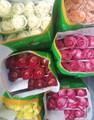 Bulk Colour Roses