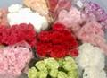 Premium Carnations Special