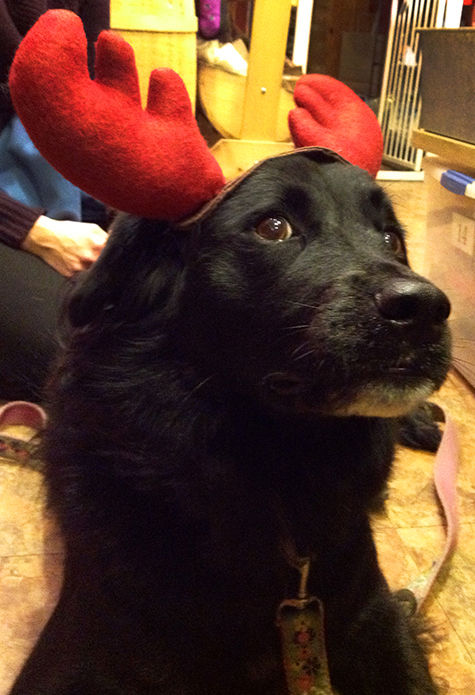 2013-dec-rosie-the-reindeer-at-beowoof-475x695px.jpg