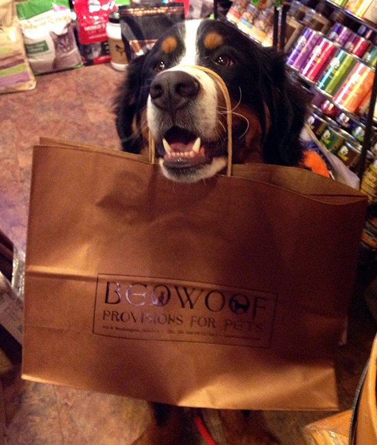 2014-may-2-lebow-with-beowoof-bag-exc-use-550x650.jpg