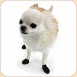 PAWZ  Disposable Dog Black Boots x12