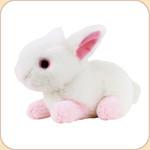 Boingo Bunny Toy