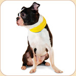 Cooling Nylon Collar--Yellow