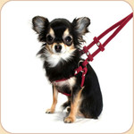 Microsuede Step In Harness with Leash--Wine
