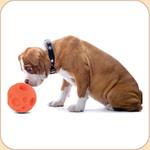 Orange Treat Ball--3 sizes