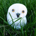 Granite White Snowy Owl on Grass