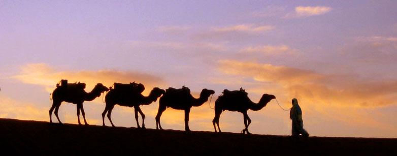camel-caravan-3.jpg
