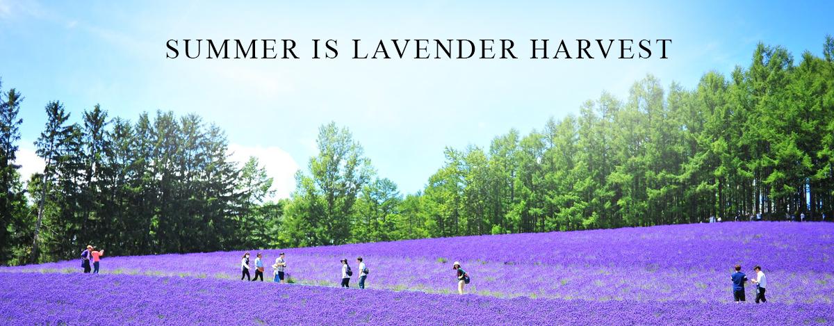 enfleurage-lavender-homepage-summer.jpg
