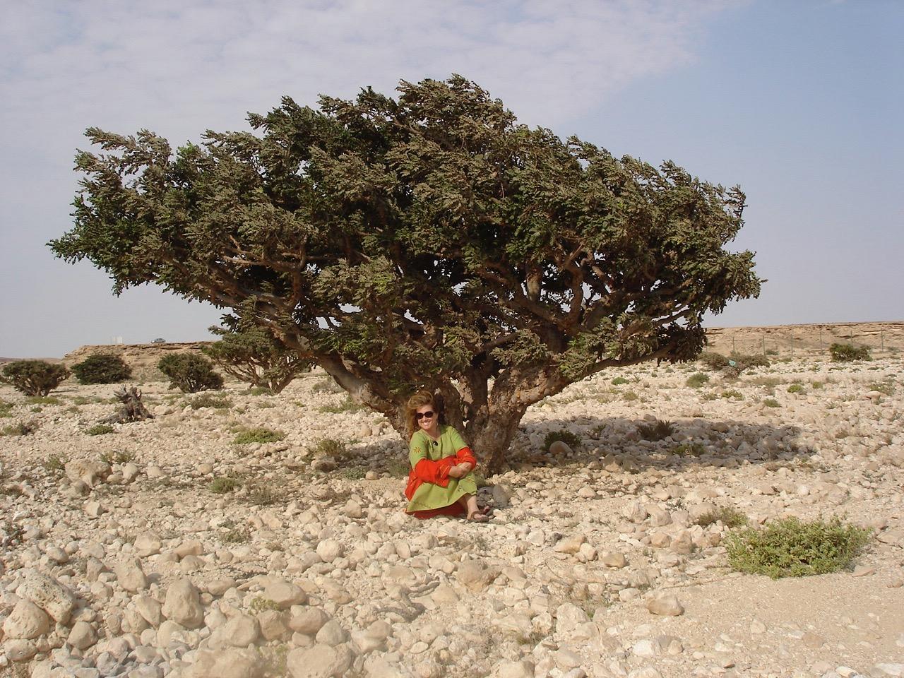 frank-tree-2007.jpg
