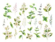 Botanical Names & Families/October 10th