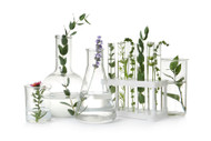 Essential Oil Chemical Groups, Part 1/November 7th