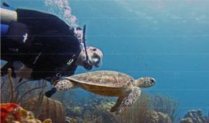 Bonaire3.jpg
