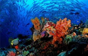 Malaysian Borneo Dive Adventure
