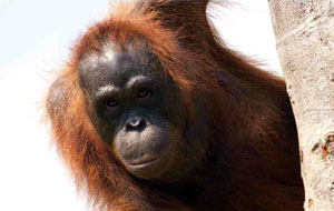 Malaysian Borneo Nature & Wildlife Adventure