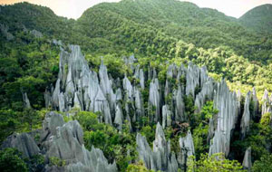 Malaysian Borneo Nature & Wildlife Adventure