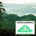 Guatemalan Antigua La Flor del Café