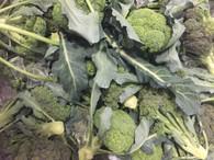 Broccoli bunch each