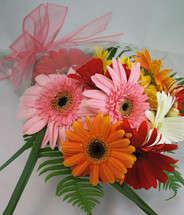 Buy The Bunch of Gerbera Daisies