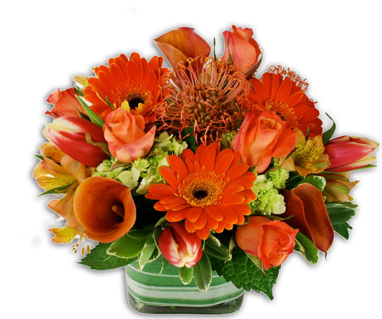 Orange Crush By Belvedere Flowers Philadelphia Area Florist